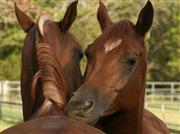 Ideal für Pferde - bei Kribbelmücke, Ekzemen oder Mauke